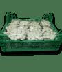 Caja Shimeji blanco